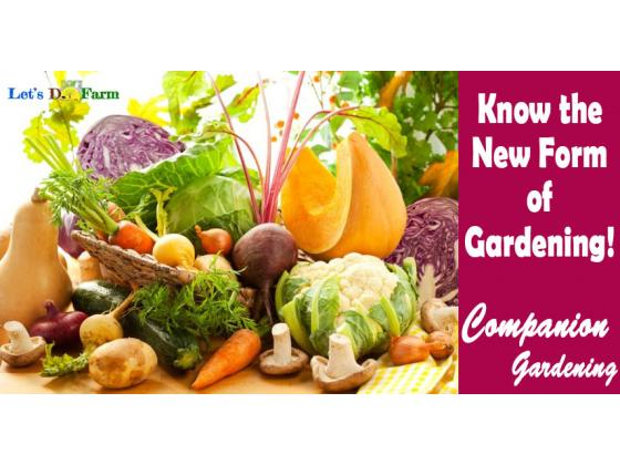 Know The New Form of Gardening - Companion Gardening!