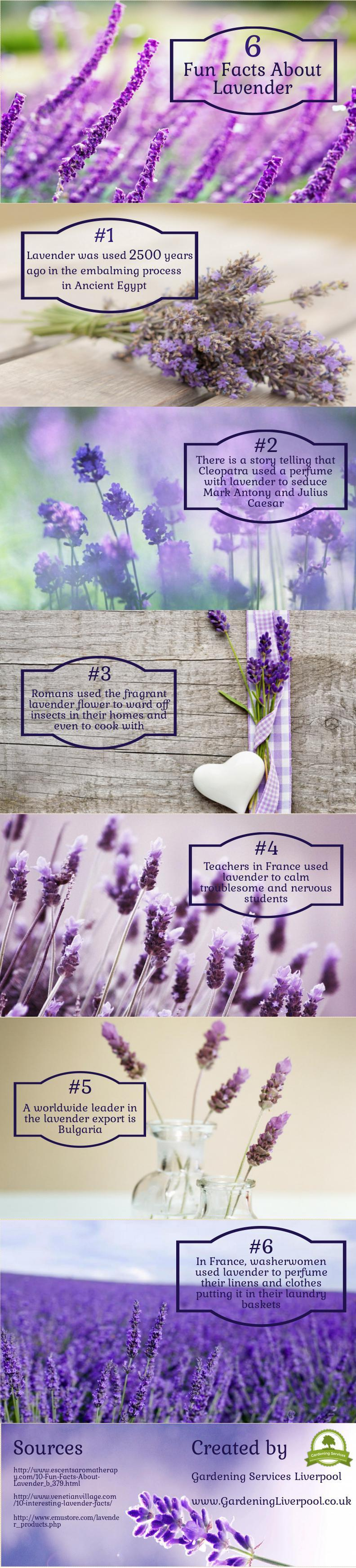 6 Fun Facts About Lavender