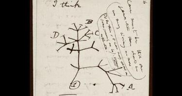 "Charles Darwin notebooks with early ideas on evolution, ""Tree of Life"" sketch, ""stolen"" from Cambridge University"