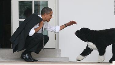 Obamas announce family dog Bo has died
