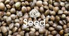 Why Choosing Autoflowering Feminized Seeds Is Advantageous?